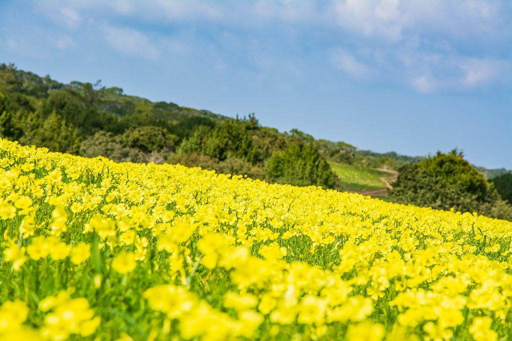 Квітуче поле