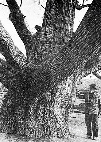 Ничипор Дейкун біля Запорозького дубу