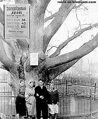 Запорозький дуб. Фото 60-х років ХХ століття