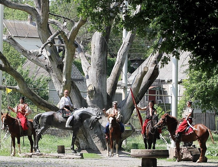 Запорізький дуб – Національне дерево України