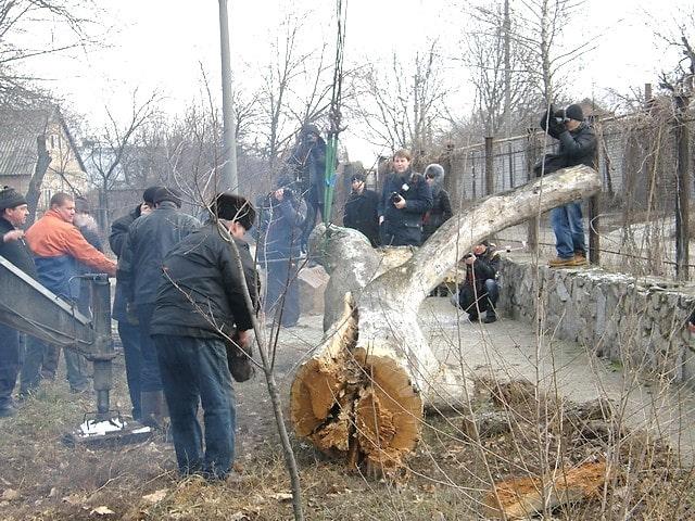 Видалення гнилих гілок Запорізького дубу