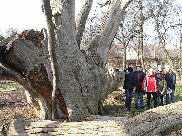 Група ЮНЕКО біля Запорізького дуба. Фото 2020 р.