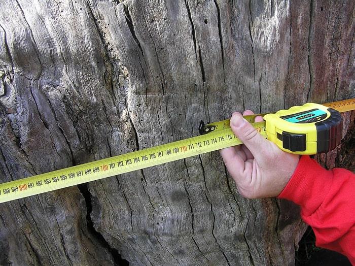 Обхват стовбура Запорізького дуба біля його основи – 712 см