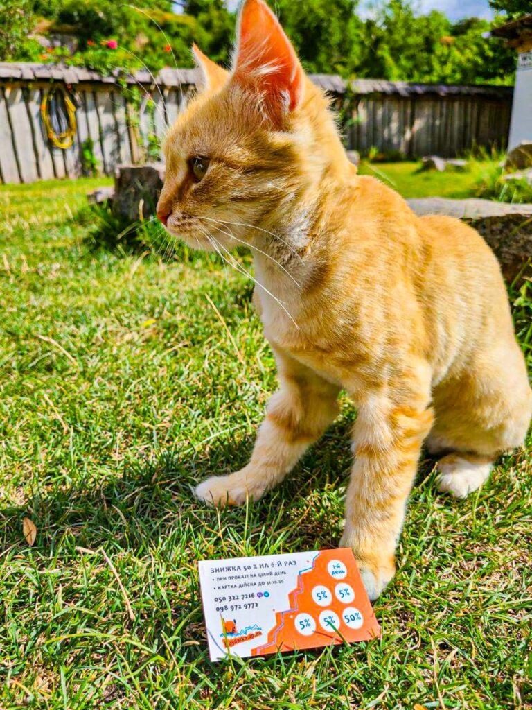 Котик і дисконтна картка