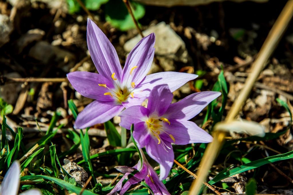 Весна в Турции